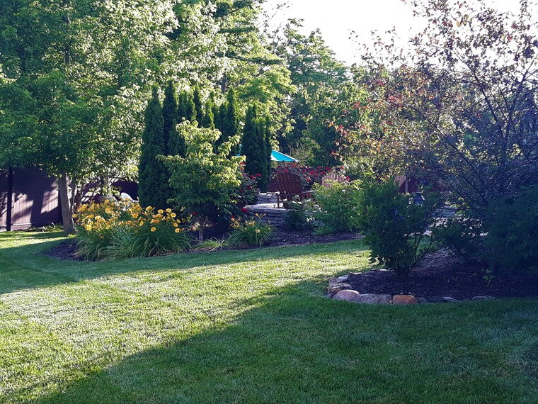 Backyard late Spring 2020.jpg